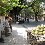 Ray and coconuts in India